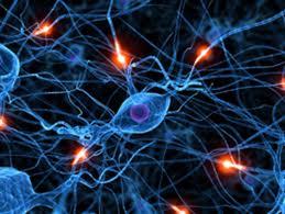 sinapsi+