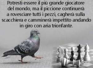 piccione_femminista